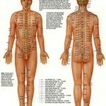 <b>Acupuncture Points</b>