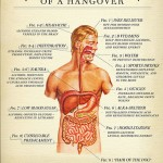 <b>Anatomy of a Hangover</b>
