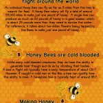 <b>Bee Facts</b>