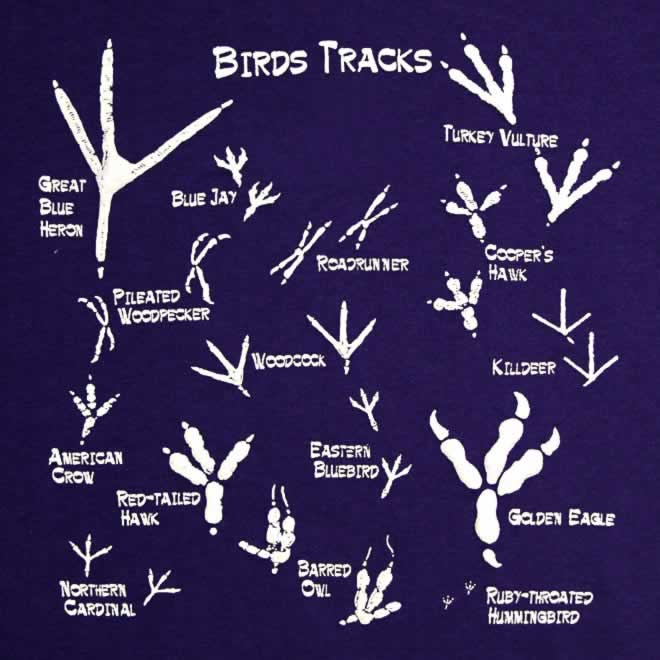 Check this birds track from different kinds.