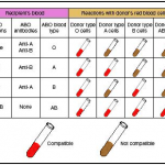 <b>Blood Type Compatability</b>