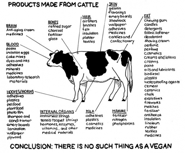 Just what are the uses of cattle?  Brain for anti-aging cream, bones for refined sugar, hair for airfilters, skin for gilatin, fat for chewing gum, Horns for plastics, internal organs […]