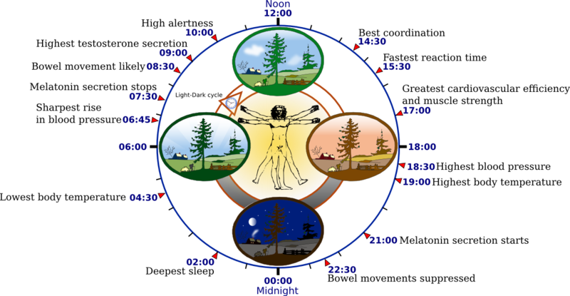 A circadian musicality is any biotic process that presentations an endogenous, entrainable directing of around the degree of 24 hours. The suggested rhythms are determined by a circadian timekeeper, and […]