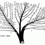 What is a Computer Tree?