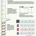 <b>DNA Identification</b>