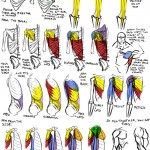 <b>Drawing Muscles (2)</b>