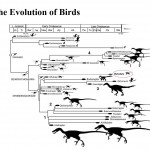 <b>Evolution of Birds</b>