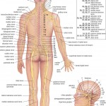 <b>HB Spinal System A</b>