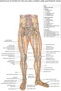 HB Spinal System B