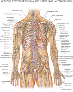 HB Spinal System C