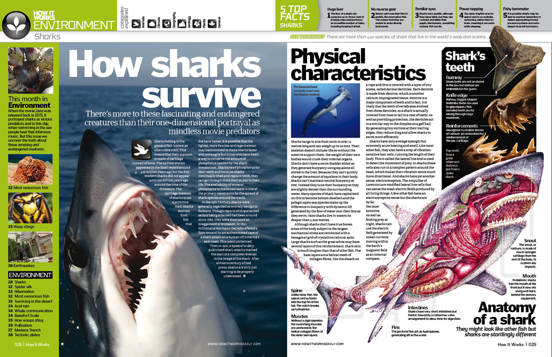We know sharks are now endangered creatures. But how do they really survive? By, seeing their physical characteristics, it seems that they are more advantage compared to other sea water […]