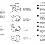 <b>How to Perform a Tracheotomy</b>