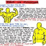 <b>Muscle Form vs Function</b>