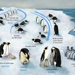 <b>Penguins March</b>
