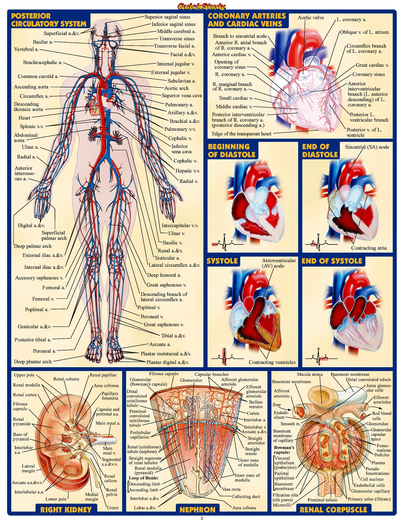 The history of anatomy has been described, as time passes, by an enduringly advancing grasping of the capacities of organs and structures in the figure. Techniques have in addition upgraded […]