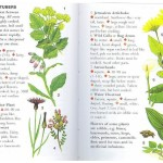 <b>SAS 033 - Edible Plants</b>