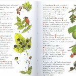 <b>SAS 034 - Edible Plants</b>