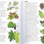 <b>SAS 035 - Edible Plants</b>