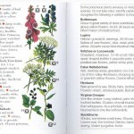 <b>SAS 037 - Edible Plants</b>
