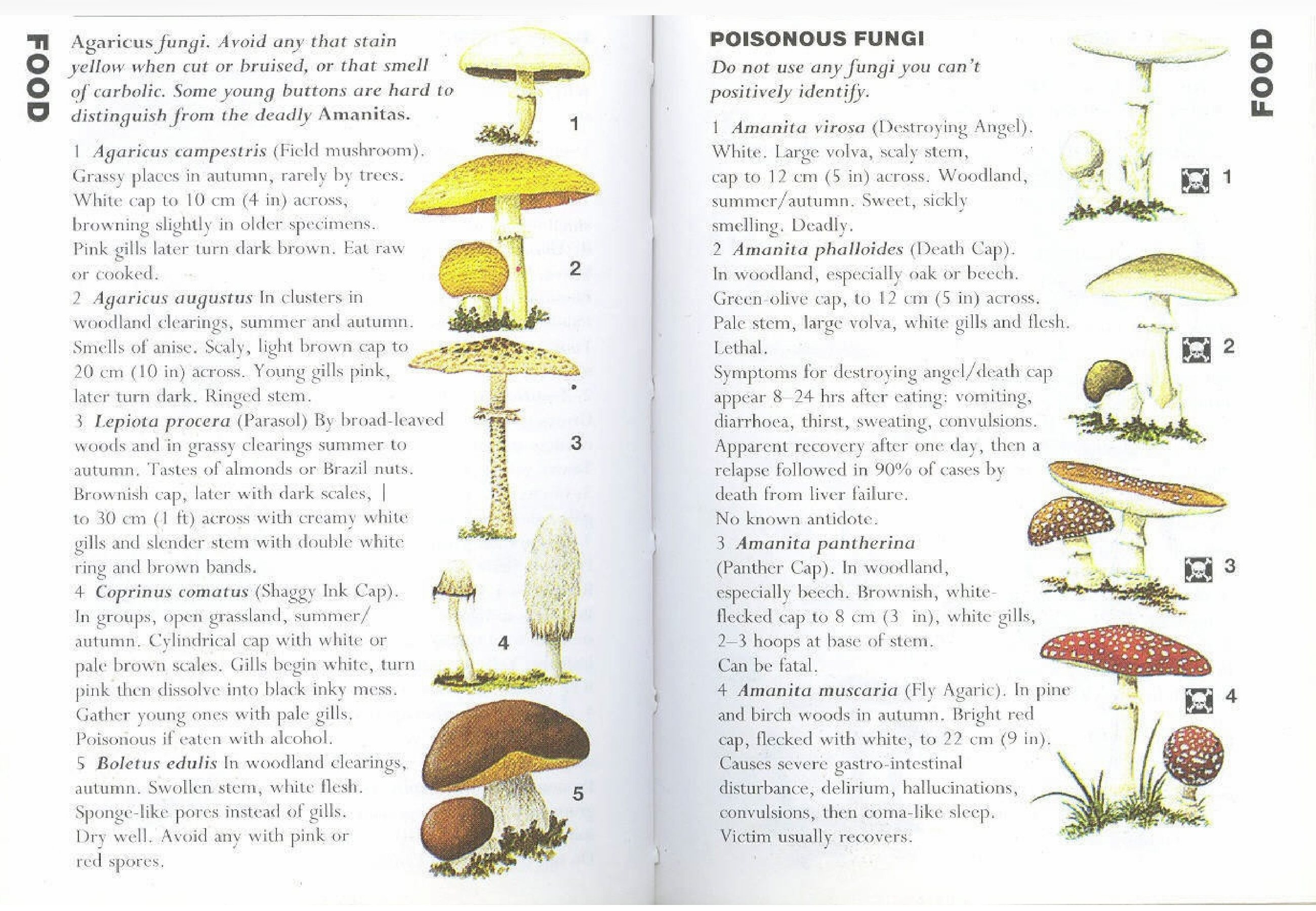 Agaricus fungi: Avoid any that stain yellow when cut or bruised, or that smell of carbolic. Some young buttons are hard to distinguish from the deadly Amanitas. Dont Use any […]