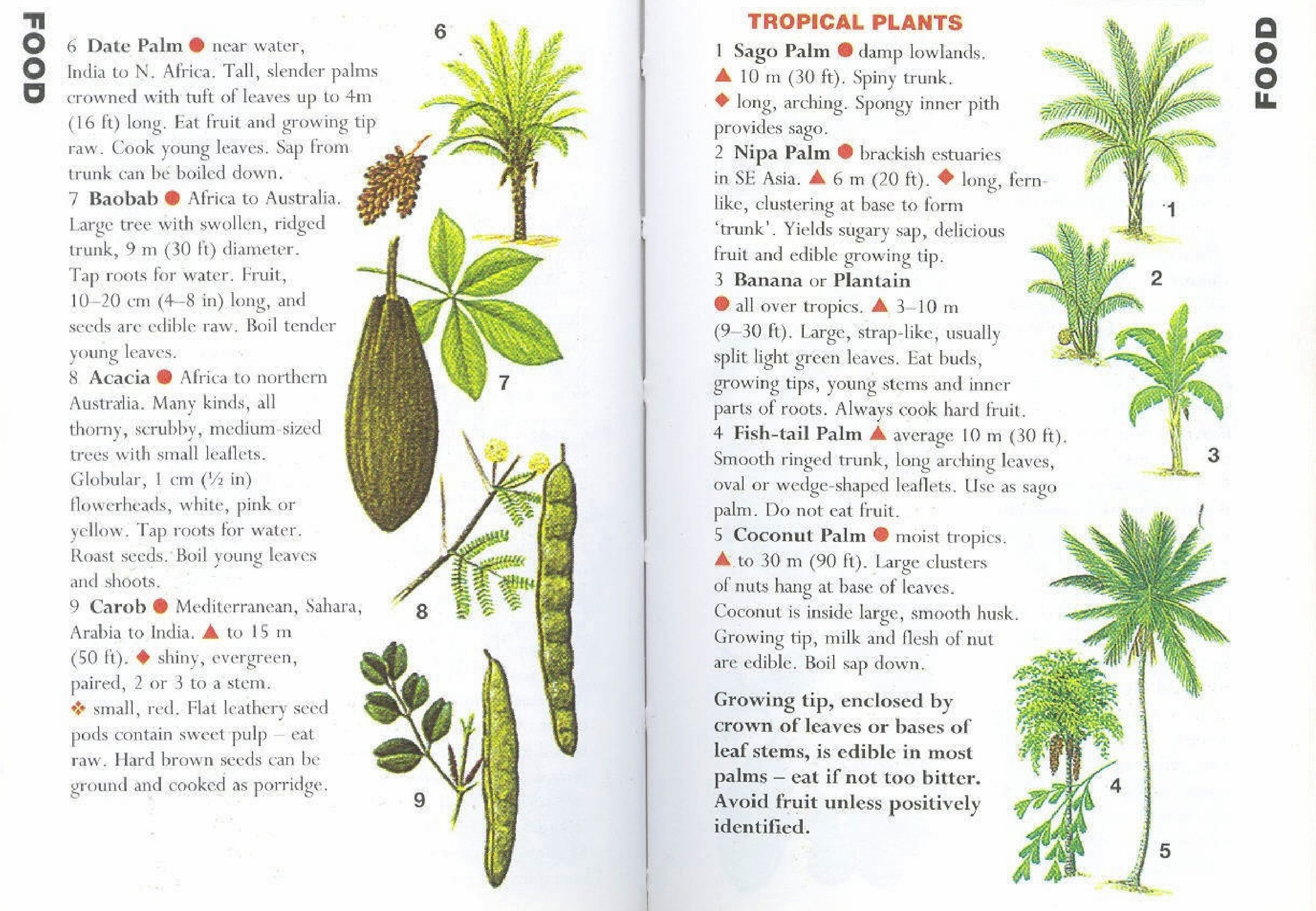 Growing tip, enclosed by crown of leaves or bases of leaf stems, is edible in most palms – eat if not too bitter. Avoid fruit unless positively identified.  Originally posted: […]