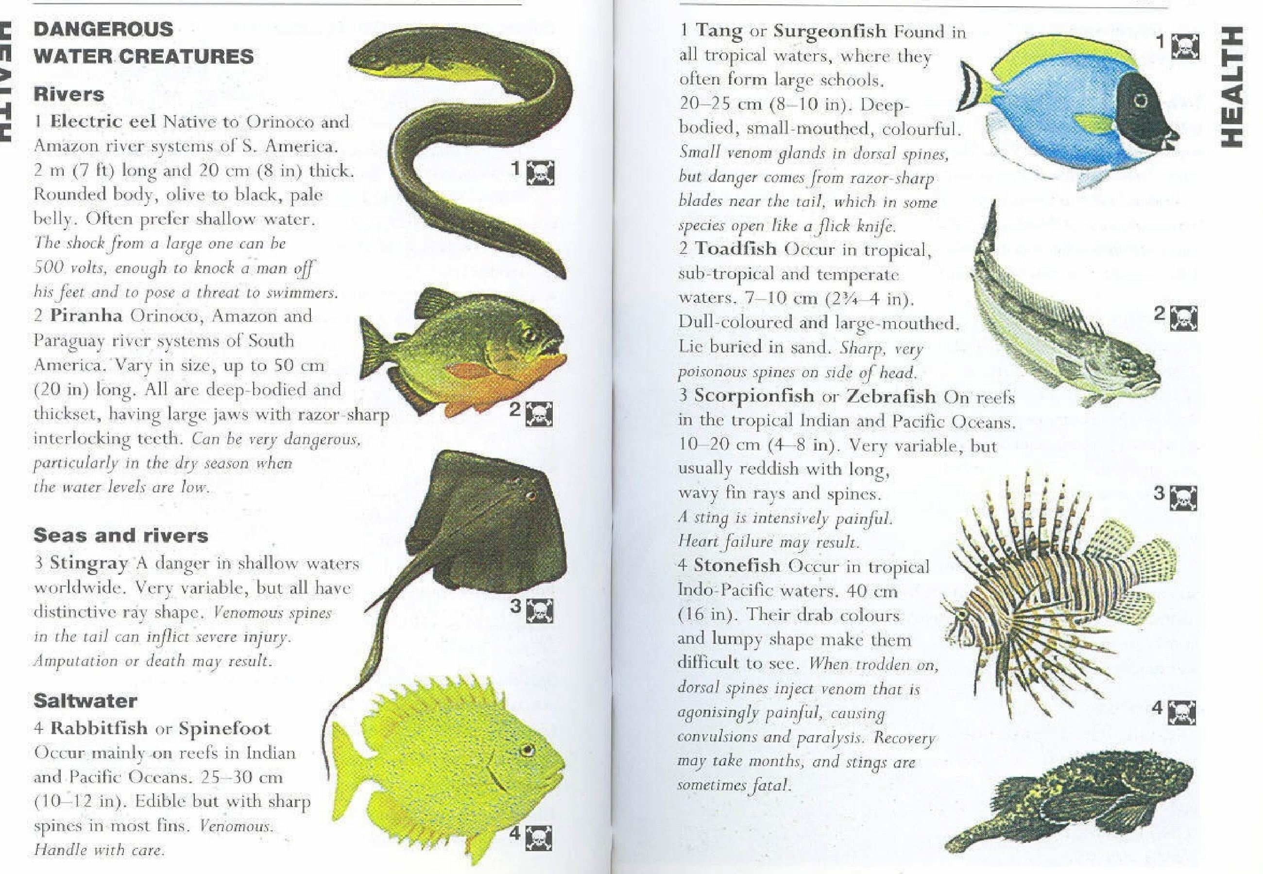 Some of the dangerous water creatures are Electric eel, Piranha, Stingray, Rabbitfish, Tang toadfish, Scorpionfish, stonefish. Originally posted: November 25, 2012