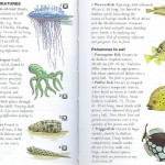 <b>SAS 171 - Dangerous Water Creatures</b>