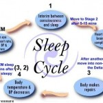 <b>The Five Stages of the Sleep Cycle </b>