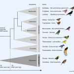 <b>Song Bird Family Tree</b>