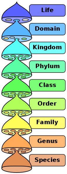 In biotic characterization, rank is the level (the relative position) in a taxonomic pecking order. Cases of taxonomic ranks are species, class, family, and class. Every rank subsumes under it […]