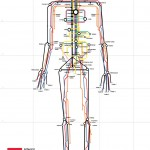 <b>Tube Anatomy</b>