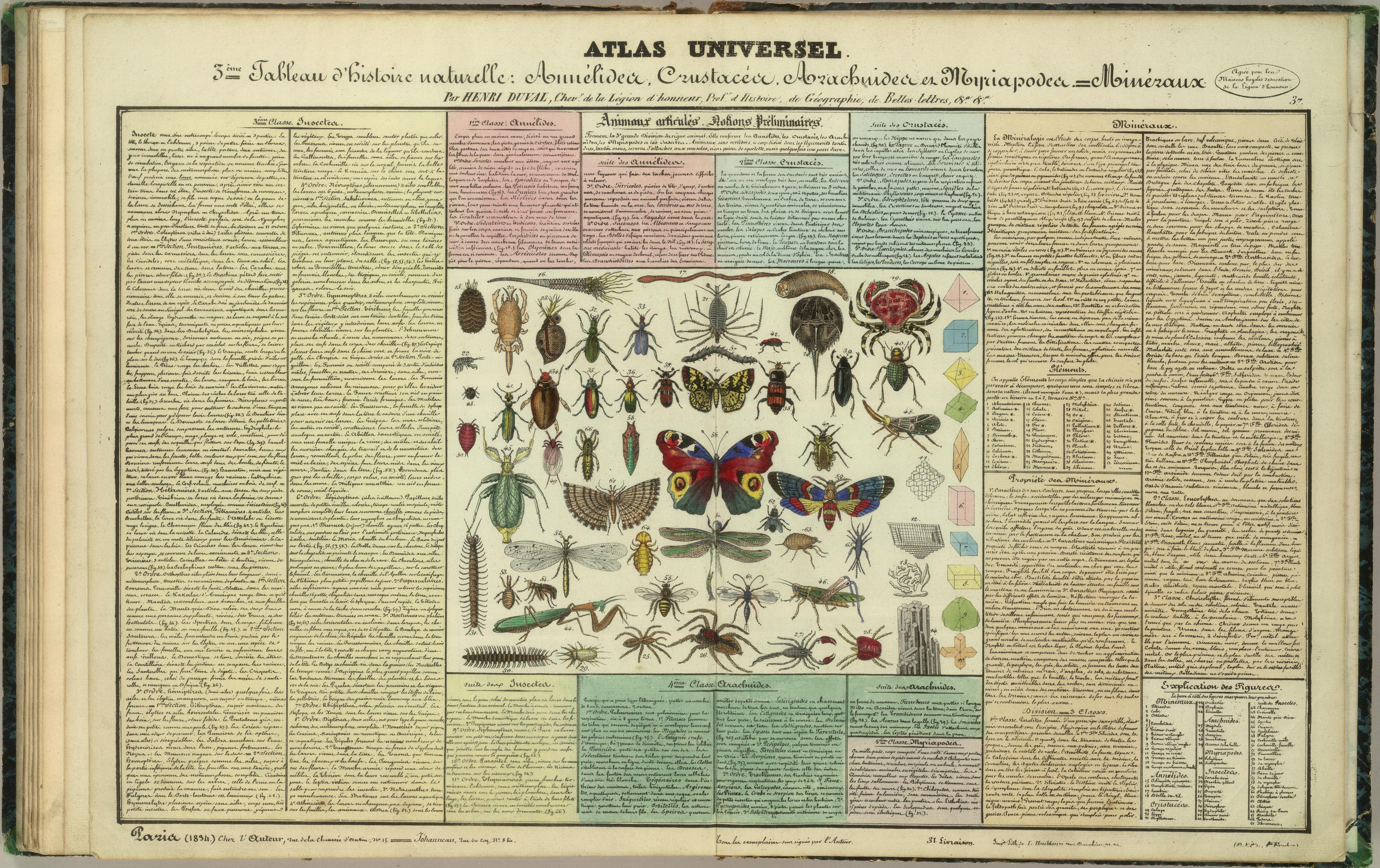 This image is just a table of insects species. You can find where they belong just by looking at it. It will help you understand a lot about them.
