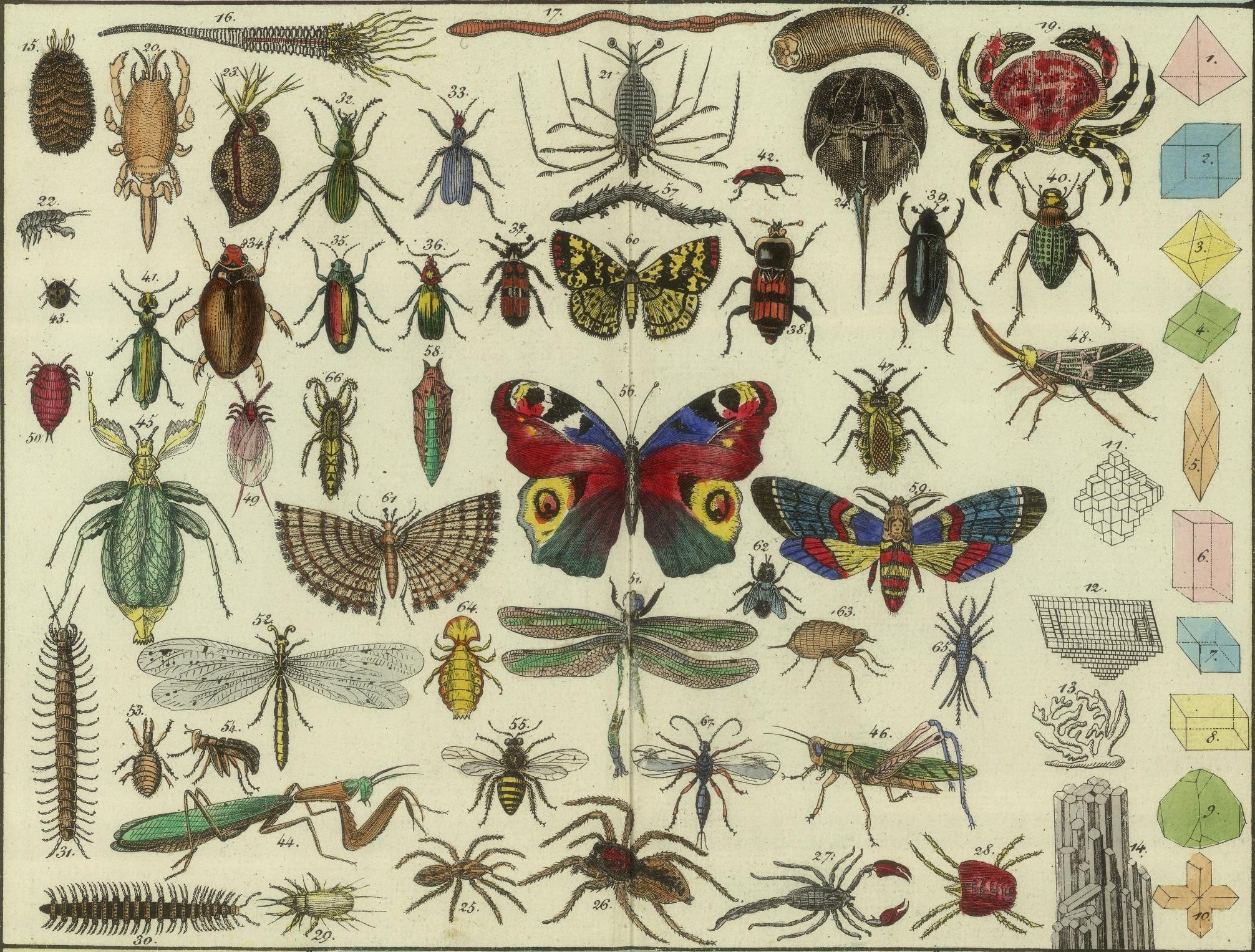 Do you know how many insects here on earth? Well, maybe there are still some species on it that are not yet discovered. Try to look at this image below, […]