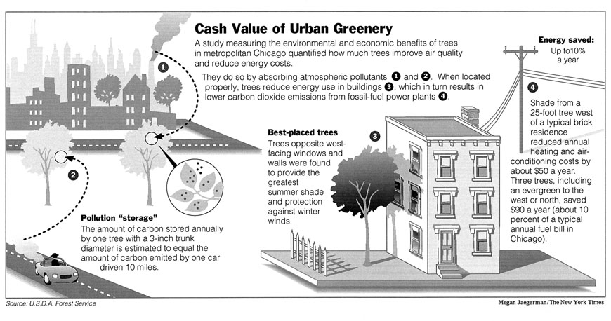 A study measuring the environmental and economic benefits of tress in metropolita chicago quantified how much tress improve air quality and reduce enery cost. They do so by absorbing atmospheric […]