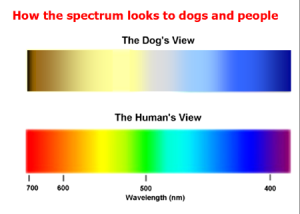Visible Spectrum for Dogs & Humans
