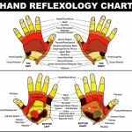 <b>Reflexology Chart - Hands</b>