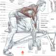 Arm teaching might be more entangled than greater figure parts for example legs, back, or midsection. All things being equal, your arms are moderately little in illustration to the final […]