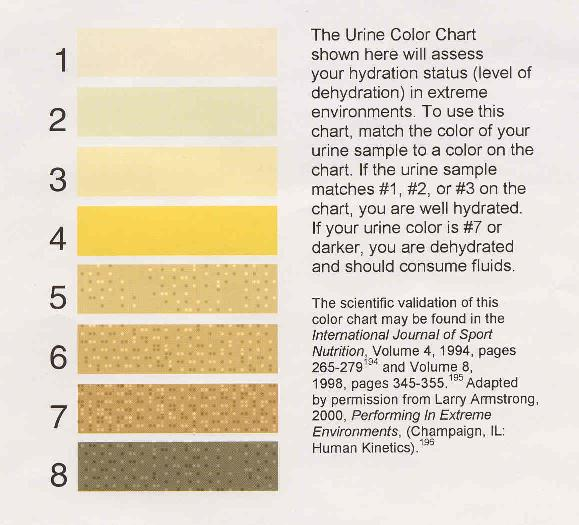 Healthy Urine Color Chart Pictures to Pin PinsDaddy – Sample Urine Color Chart